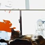 猫と遊びながら……埼玉・本川越の猫カフェで撮影してきた!
