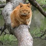 パナのハイエンドコンデジ「DMC-TX1」を購入、早速猫撮影!