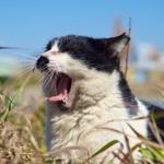 16年前から知っている猫スポットで大工事開始……猫たちはどこに?