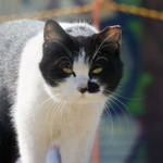 ニコンの高級コンデジ「DL」に触発されて……Nikon 1で猫撮影!