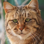 表情が面白い! 猫の顔のアップ写真を集めてみた