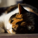 レンズ交換で楽しむ、よく晴れた日の猫撮影