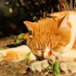 日向の猫と日陰の猫、気を配るべき撮影ポイント