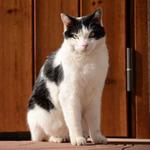 冬の陽射しを浴びた年末年始猫