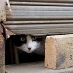 東京の高低差散歩をより楽しく! 街で見つけた暗渠猫と高台猫