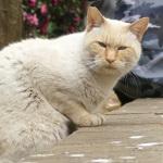 猫撮りに最適!? パナのデジカメの新機能「フォーカスセレクト」を試す