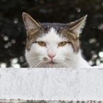 「THETA S」で見た、15年通ってる川原の屋根上猫の姿