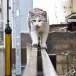 這いつくばらないで撮れる! 塀の上の猫たち