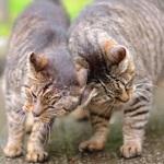 猫2匹が視界に入ったら……ごっつんこの挨拶が撮れるかも!?