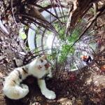 リコーの全天球カメラ「THETA S」で川崎の猫だまりを撮る!