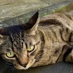 iPhone 6s Plusの「Live Photos」で猫の決定的瞬間を残す!