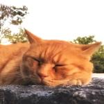 買ったばかりの「iPhone 6s Plus」で猫を撮る!