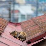 富士フイルム「X-T10」で撮る、鞆の浦と尾道は屋根猫の宝庫!