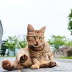 坂と海と猫の街! 尾道でも猫写真三昧!!