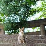 猫といえばココ! 広島県・鞆の浦で猫写真三昧!!