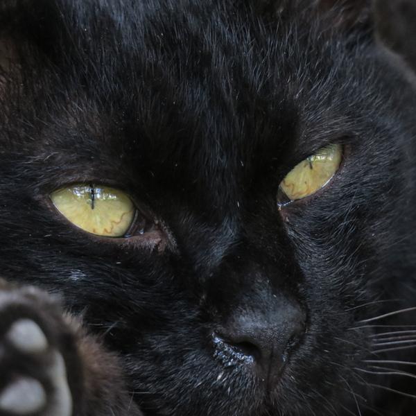 真っ暗 で 何 も 見え ない ネコ は どこで しょう