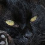 キヤノンの高級望遠コンデジ「Powershot G3X」で猫撮影!