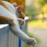 「LUMIX G7」で撮る、夏恒例無防備すぎる猫たち!