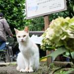 偶然発見! 猫がいっぱいいる公園の梅雨の風景