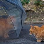 梅雨だから撮れる、しっとりとした風情の猫たち