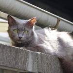 塀や屋根の上を華麗!? にキャットウォークする猫たち
