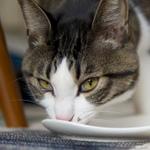 究極の猫まっしぐらツール!? 「ちゅ~る」のすごい威力