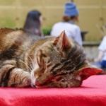 パナのハイエンドデジカメ「FZ1000」で撮る初夏の猫