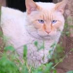 富士フイルム「X-T1」を持って都内の猫スポットを訪ねる