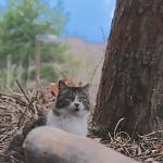 富士山麓に猫が鳴く! 雄大な風景の中の猫たち