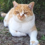 「OLYMPUS AIR A01」+猫じゃらし+自撮り棒で猫を釣る!
