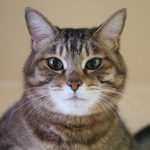 アングルフリーが魅力! レンズだけカメラ「OLYMPUS AIR」で猫撮り