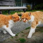 フィルター加工も簡単! 高級スマホカメラ「DMC-CM1」で撮った猫