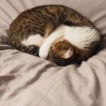 意外と撮るのが難しい!? 春眠している猫たち
