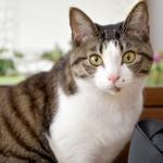 猫宅訪問! かわいすぎる肉球を持つ猫