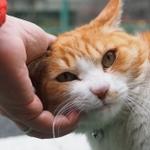 港区に新宿区……都会の路地裏で見かける猫たち