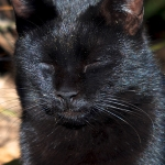 写真映えするように黒猫を撮るコツ