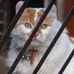 猫撮り最高デジカメの最新機種「Stylus 1s」で冬の猫を撮る