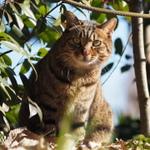 猫撮影には単焦点の中望遠レンズがおススメ!