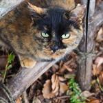 城址のお堀にいる遠くの猫を望遠で狙う!