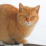2014年の締めはきれいな猫写真で! 今年のお蔵出し写真