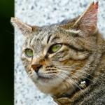 FZ1000にRX100M3……2014年の猫デジカメ総まとめ(その1)