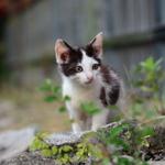 可愛すぎてズルい!? 夏と冬に撮った子猫写真
