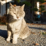 秋の情景をバックに! 信州小諸で猫撮り散歩