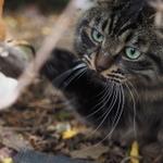 秋冬限定のワザ!? 素っ気ない猫の気を惹く方法