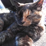 カシオ「EX-FR10」で撮る、普通ではありえないアングルの猫写真