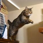 猫がジャンプする瞬間が撮りたい! 無理矢理狙ってみた!!