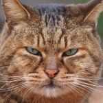 猫の顔をアップで! キレイに撮る秘訣は?