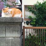 画面が見やすくてAFが速い「iPhone 6 Plus」で猫撮影!