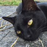 猫を撮って気付いた「iPhone 6 Plus」のカメラの進化