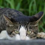 新たなベスト猫撮りカメラ!? 光学16倍ズーム搭載の「LUMIX FZ1000」